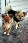 hundar, den ena med frusen tunga, funna: utanför affären